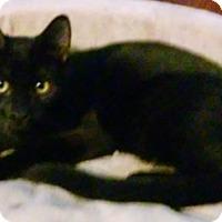 Adopt A Pet :: Force - North Highlands, CA