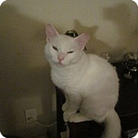 Adopt A Pet :: Vanna White - Seminole, FL