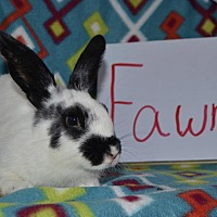 American for adoption in Erie, Pennsylvania - Fawn