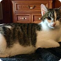 Adopt A Pet :: Gilly - Island Park, NY