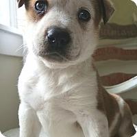 Adopt A Pet :: Samson - West Grove, PA