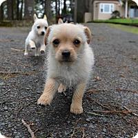 Adopt A Pet :: Gene - Eugene, OR