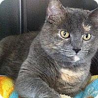 Adopt A Pet :: Chica - Topeka, KS