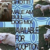 Adopt A Pet :: GHOTTI - Hollywood, FL