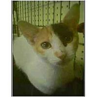 Adopt A Pet :: Kiwi - Owasso, OK