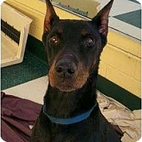 Adopt A Pet :: Zeus - New Richmond, OH