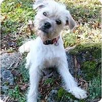 Adopt A Pet :: Talcum - Mocksville, NC