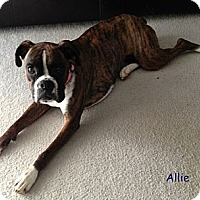 Adopt A Pet :: Allie - St. Robert, MO