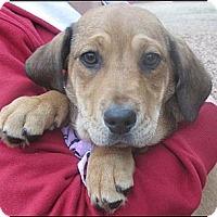 Adopt A Pet :: Meg - Somers, CT