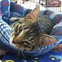 Adopt A Pet :: Dennis - Riverhead, NY