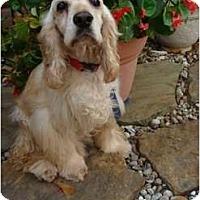 Adopt A Pet :: Rudy - Sugarland, TX