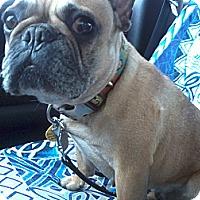 Adopt A Pet :: Nadia - Cumberland, MD