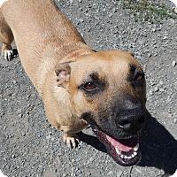 Adopt A Pet :: Goldie - Charleston, AR