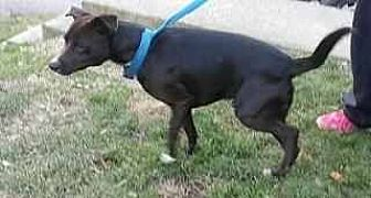 Feist Mix Dog for adoption in Prestonsburg, Kentucky - connor
