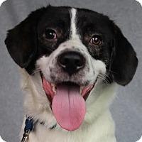 Adopt A Pet :: Binx - Minneapolis, MN