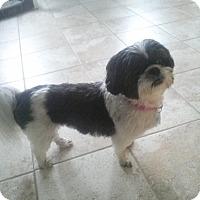 Adopt A Pet :: Mia - Acushnet, MA