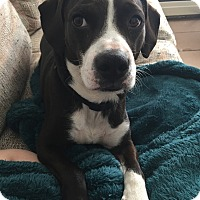 Adopt A Pet :: Franklin-new pictures - Foster, RI