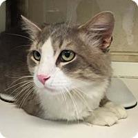 Adopt A Pet :: Calgary - Merrifield, VA