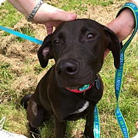 Adopt A Pet :: Buddy - in Maine - kennebunkport, ME