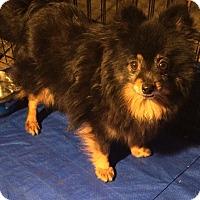 Adopt A Pet :: Tina - Overland Park, KS