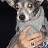 Adopt A Pet :: Cupcake - Creston, CA