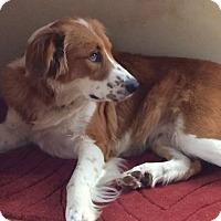 Adopt A Pet :: Dierdre - Danbury, CT