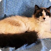 Adopt A Pet :: Sergio - Greensboro, NC