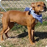 Adopt A Pet :: Frogger - Aurora, IL