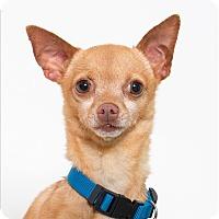 Adopt A Pet :: Chip - San Luis Obispo, CA