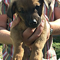 Adopt A Pet :: Zip - Boulder, CO
