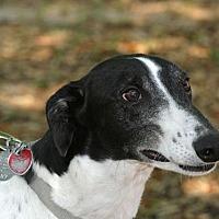 Adopt A Pet :: Russ - Longwood, FL
