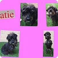 Adopt A Pet :: KATIE - Plano, TX
