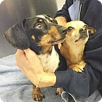 Adopt A Pet :: Jimmy&Jasper- DISCOUNT ON PAIR - Brattleboro, VT