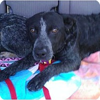 Adopt A Pet :: Wyatt Adoption Pending - Phoenix, AZ