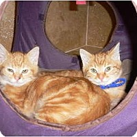 Adopt A Pet :: Da Boyz - lake elsinore, CA