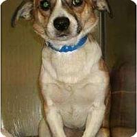 Adopt A Pet :: CarsonPENDING - Toronto/Etobicoke/GTA, ON
