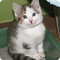 Adopt A Pet :: Dudley - Dover, OH