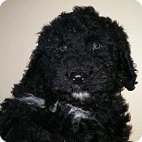 Adopt A Pet :: Micky - Northumberland, ON