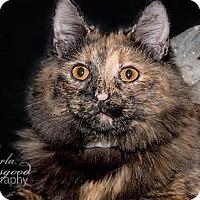 Adopt A Pet :: Lila - Chino Hills, CA