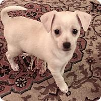Adopt A Pet :: Kate - Studio City, CA