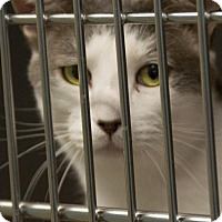 Adopt A Pet :: O'Malley - Scituate, MA