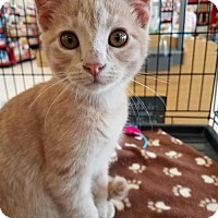 Adopt A Pet :: Mickey - Incline Village, NV