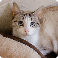 Adopt A Pet :: Mya - Greenwood, SC