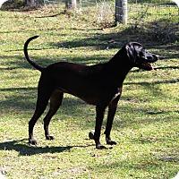 Adopt A Pet :: COCO - Odessa, FL