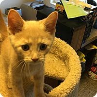 Adopt A Pet :: Manny - Covington, KY