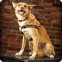 Adopt A Pet :: Trudy - Owensboro, KY