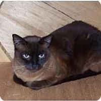 Adopt A Pet :: Cookie - Makawao, HI