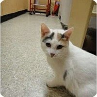Adopt A Pet :: Tulip - Howell, NJ