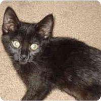 Adopt A Pet :: Natasha - Davis, CA