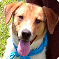 Adopt A Pet :: ALEX - Glastonbury, CT
